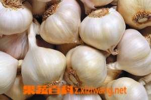 血糖高能吃大蒜吗 血糖高可以吃大蒜吗