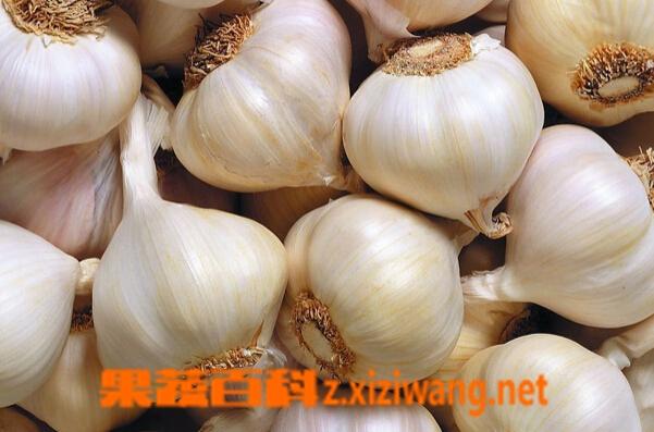 果蔬百科血糖高能吃大蒜吗